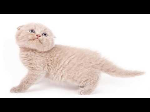 3 of my Favorite Cat Breeds