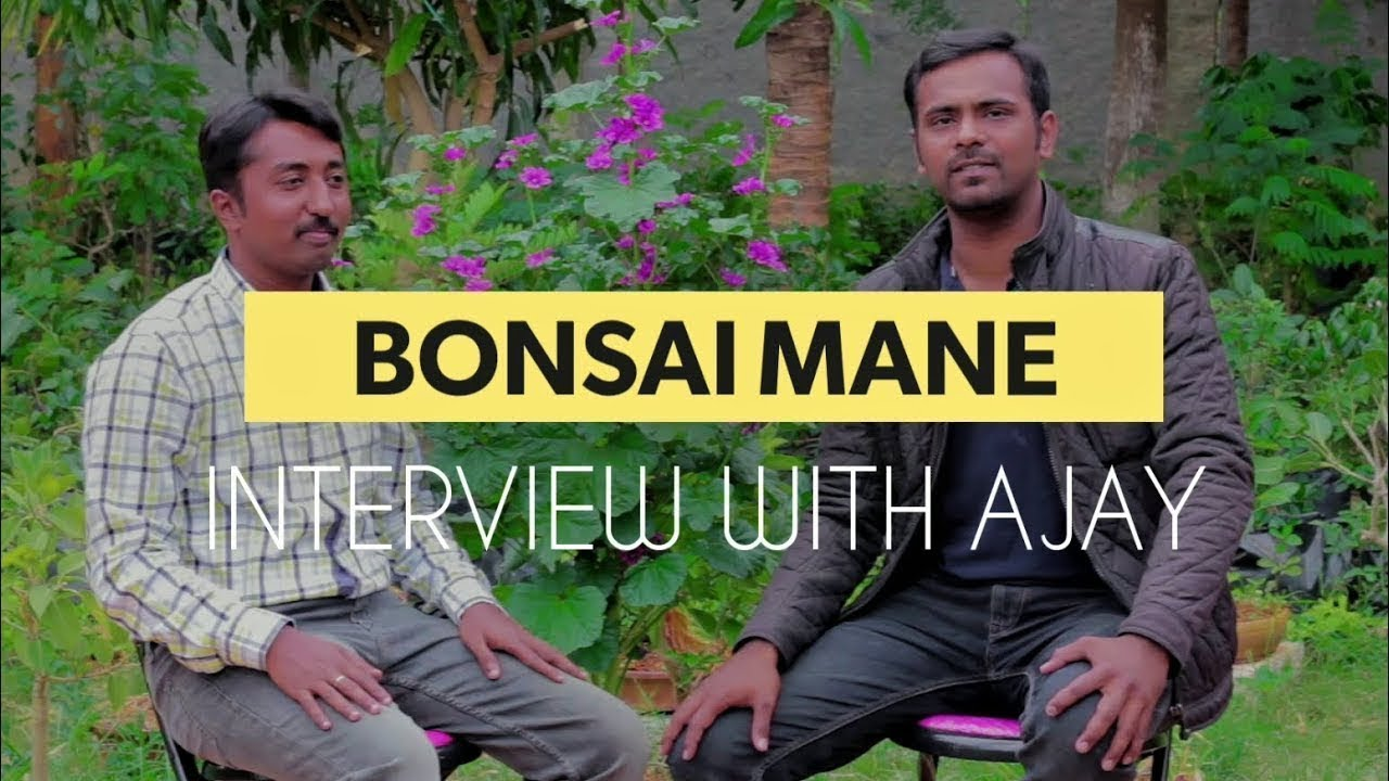 Bonsai Tree Bonsai Bonsai Mane Info With Subtitles Bonsai Plants Bonsai Bangalore Youtube
