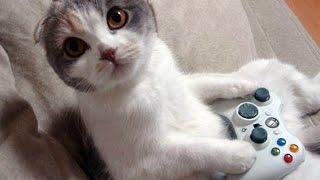 Видео игра для котенка на мониторе