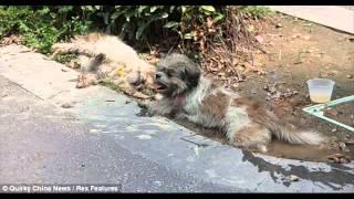 грустная история двух собак=(