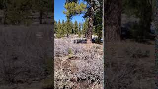Amazing almost 1/2 Acre Home Site in Truckee CA.