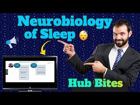Neurobiology of Sleep Circadian Rhythms, Sleep-Wake Cycle and Insomnia