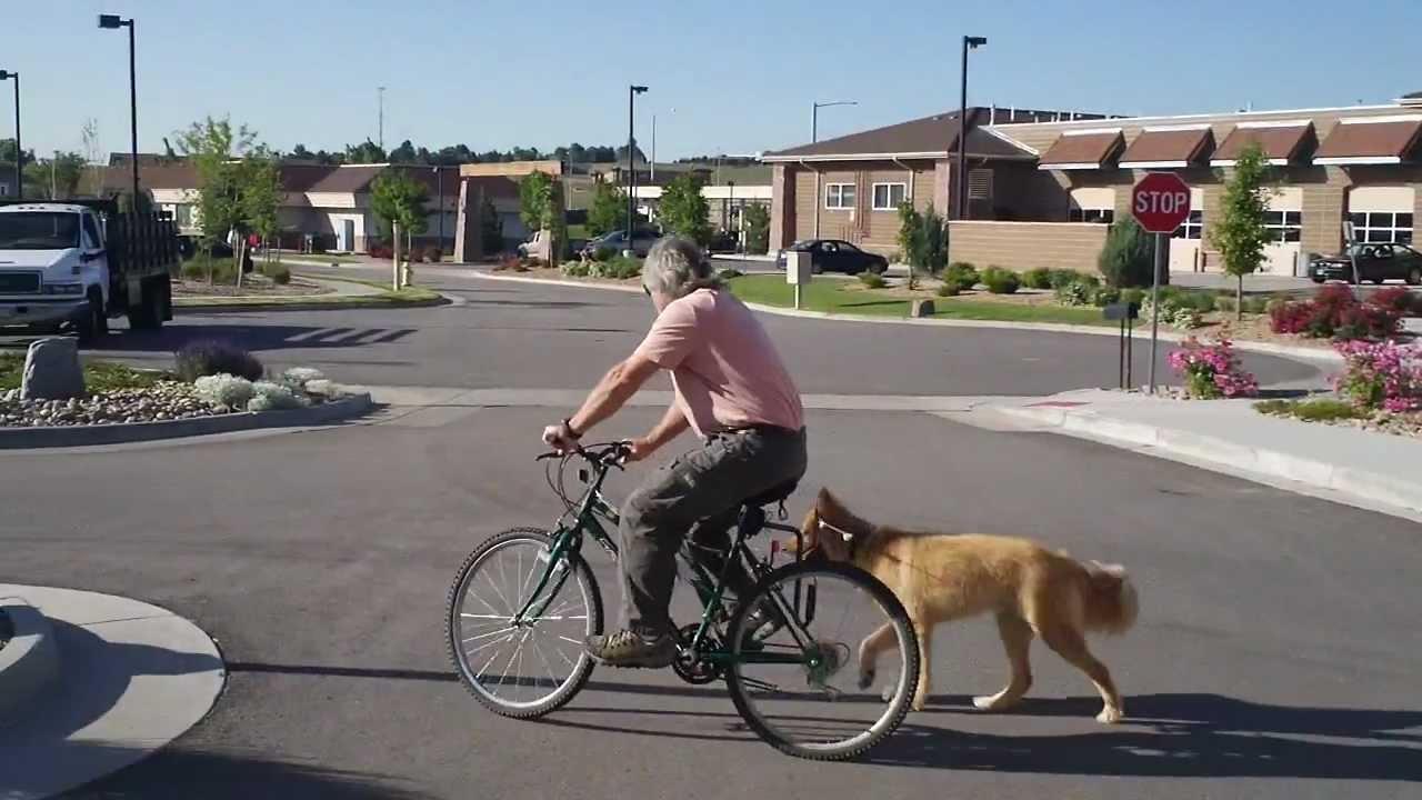 Dog S First Ride Using The Springer Bike Dog Exercise Jogger At