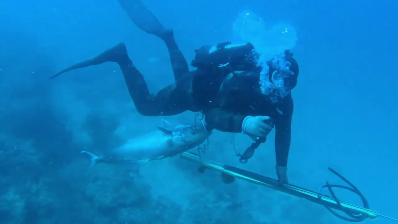 Spearfishing offshore Tampa, Florida