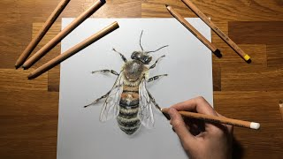3D DRAWING | How to draw a 🐝 | Pastel Speed Drawing