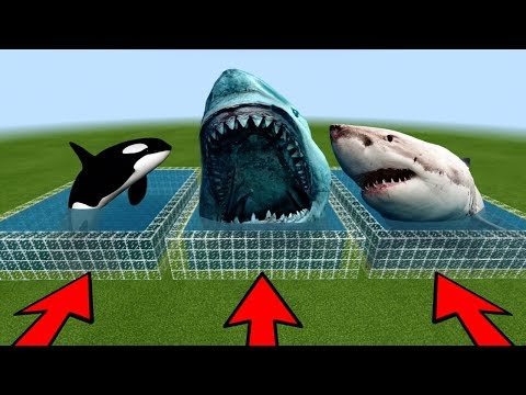 DO NOT CHOOSE THE WRONG POOL In Minecraft PE! (Megalodon, White Shark & Orca)