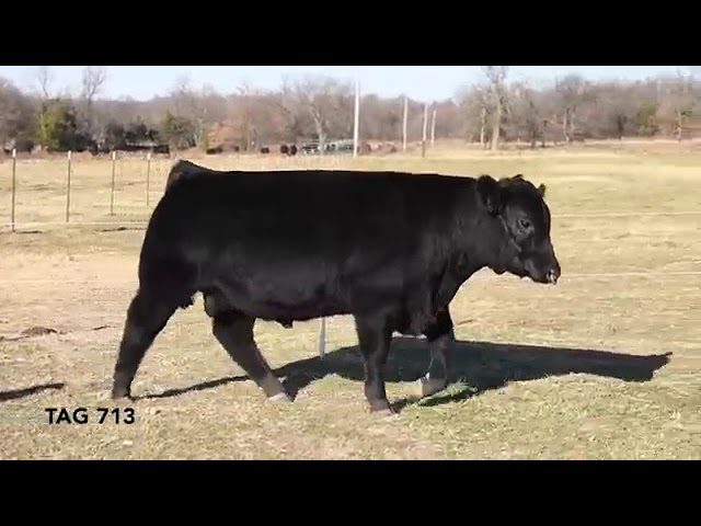 Missouri Angus Futurity Lot 69