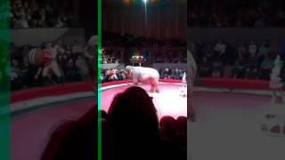 Слониха играет в мяч