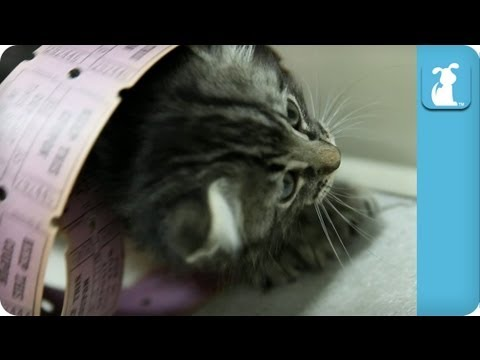 Cute Kittens in a Giant Pile of Raffle Tickets - Kitten Love