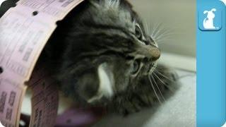 Cute Kittens in a Giant Pile of Raffle Tickets - Kitten Love