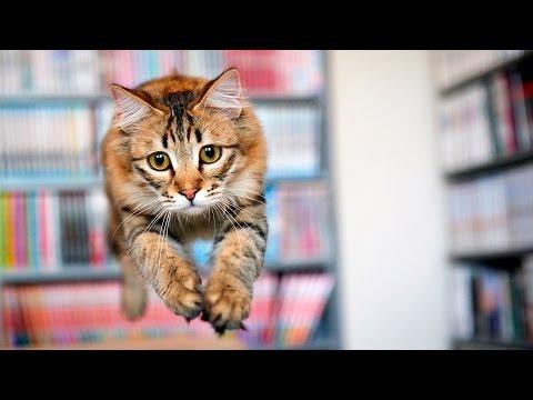 Cats Jumping #33