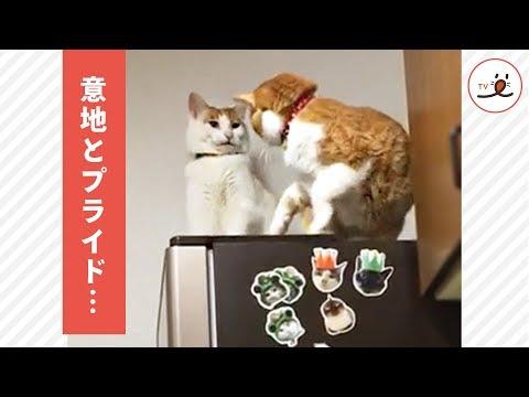 民家の冷蔵庫でネコが立てこもり?
