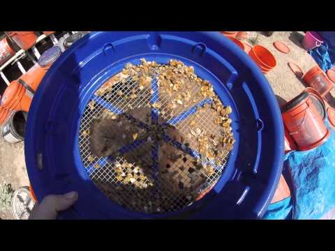 Barstow Coolgardie Area Gold Prospecting 6-9-2015  Larry