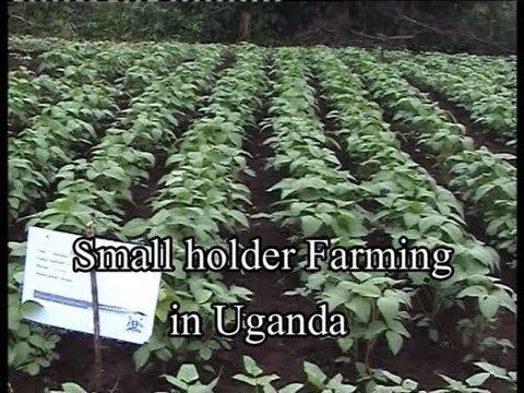 Small holder Farming in Uganda