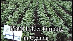 Small holder Farming in Uganda