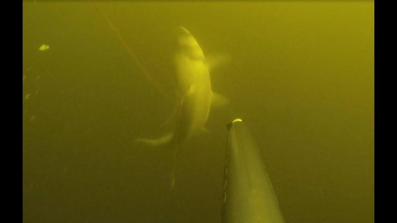 Где и как искать толстолоба: подводная охота в Запорожской области