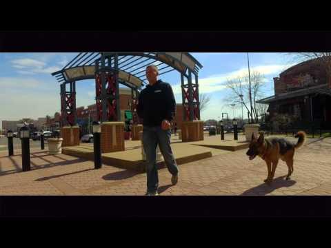 1.5 Year Old German Shepherd, Leo! Off Leash Heeling in NYC and More!