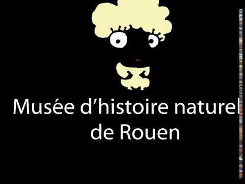 Diaporama au Musée D'histoire Naturelle De Rouen- Les Fossiles 02 18 1