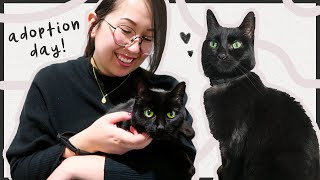 I Adopted A Cat!  First Day Vlog + Supplies Haul