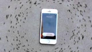 hormigas giran en circulo alrededor de un telefono celular