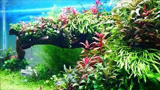 Relaxing Planten freshwater aq…