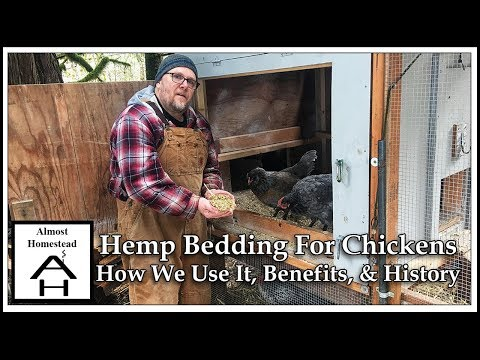 Hemp Bedding For Chickens How We Use It, Benefits, And History