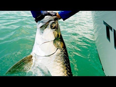 Fishing For Giant Tarpon And Kingfish