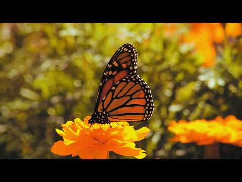 Butterflies in Battery Park NYC - Canon 80D Tamaron 70 300