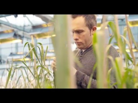 Plant Breeding Matters | Improving our everyday lives