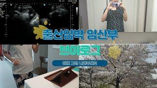[Vlog] 임산부 브…