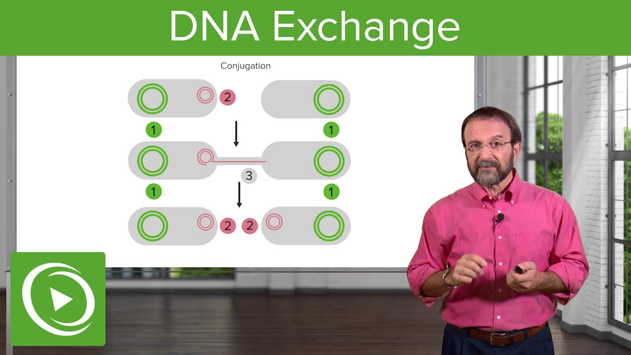 DNA Exchange: Transformation, Conjugation & Transduction – Microbiology | Lecturio