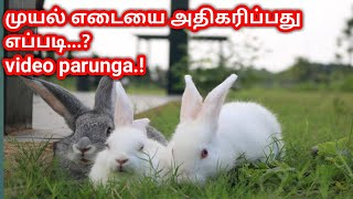 How to increase rabbit weight /முயல் எடையை அதிகரிப்பது எப்படி, care rabbit, Rabbit sale in chennai.