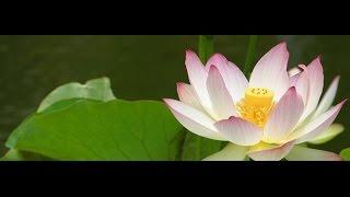 Lojong: Seven-point mind training (English – Italian) – 15/16 March 2014
