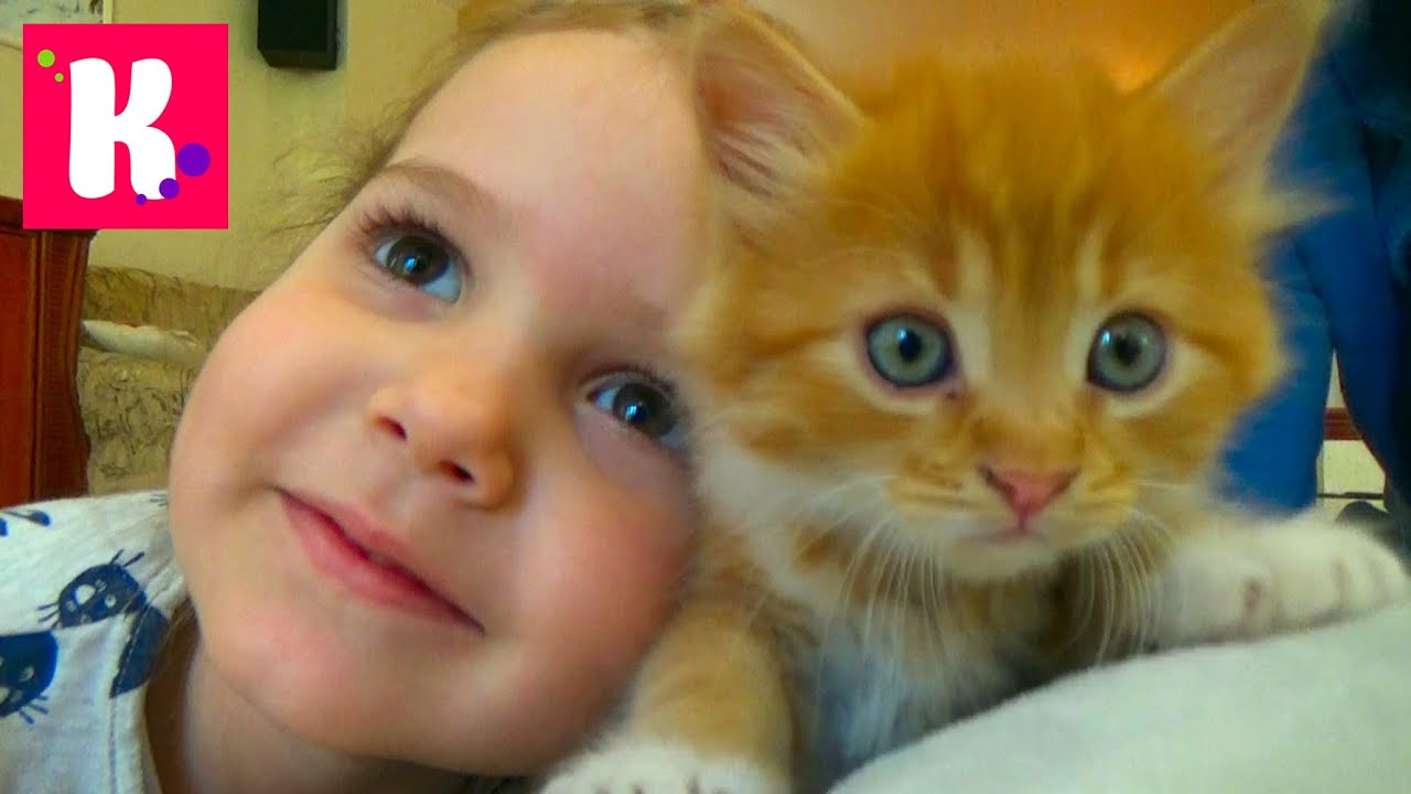 Мисс катя с котом