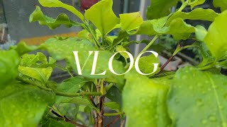 (ENG)유지르썸 식물 브이로그 해바라기, 캐모마일 키…