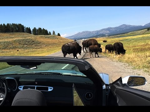 ep5 YELLOWSTONE NATIONAL PARK ADVENTURE HD