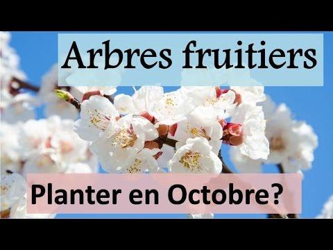 Arbres fruitiers à planter en octobre ? | ما هي الأشجار المثمرة التي تزرع في أكتوبر؟ - YouTube