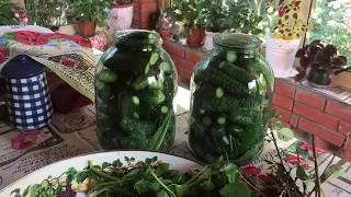 Засолка огурцов без стерилизации уксуса/ огурцы в виноградных листьях