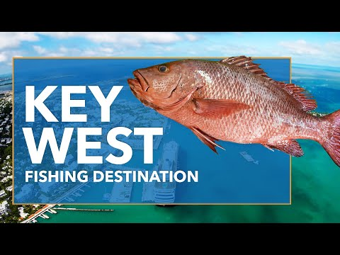 Fishing In Key West: All You Need To Know | FishingBooker