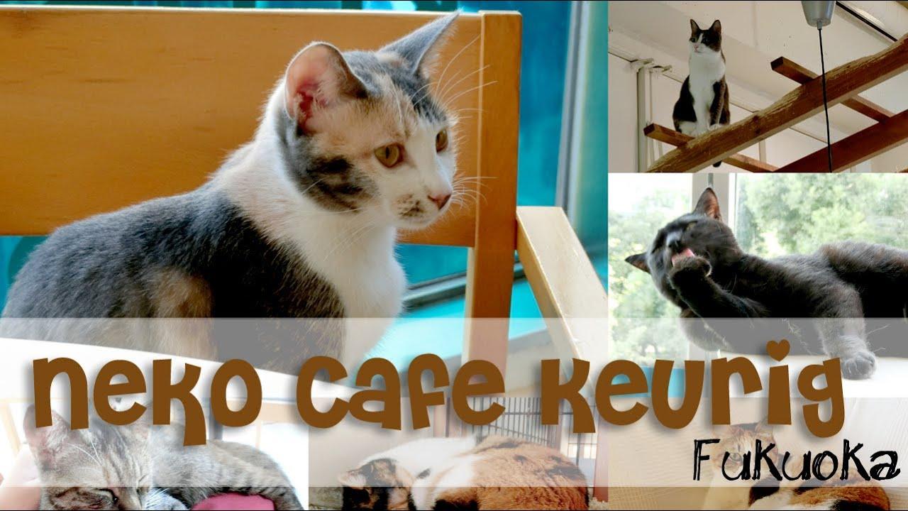 猫 カフェ キューリグ