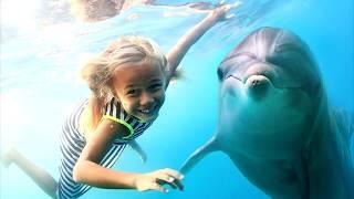 Какое ЖИВОТНОЕ умнее ЧЕЛОВЕКА? Самые Разумные Животные в Мире Гениальные Дельфин Обезьяна Собака Кот