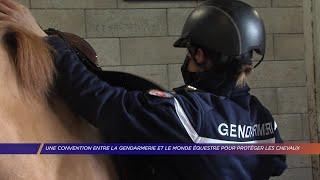 Yvelines | Une convention entre la gendarmerie et le monde équestre pour protéger les chevaux