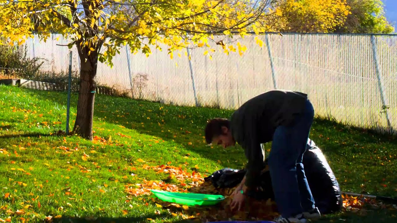 cleaning up leaves in my backyard youtube