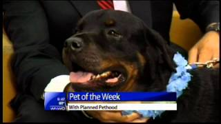 """Meet 6-year-old Loving Rottweiler Named """"forest"""""""