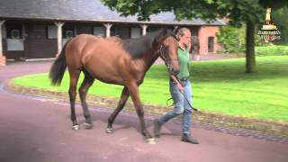 Tattersalls October Yearling Sale Book 1 Preview