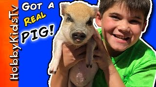 hobbypig-gets-a-pig