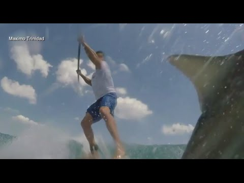 Shark Collides With Man on Paddleboard