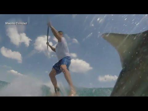 Un paddleboarder se defendió de un tiburón que lo tumbó de su tabla