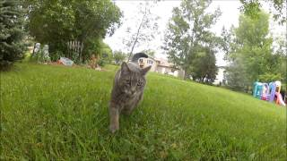 Repeat youtube video Dog Meets Neighbor Cat in the Yard