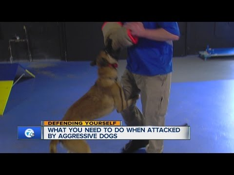 Defending yourself from a dog attack